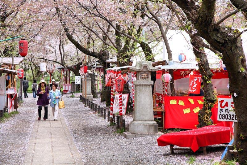 Sakura in Japan stock foto