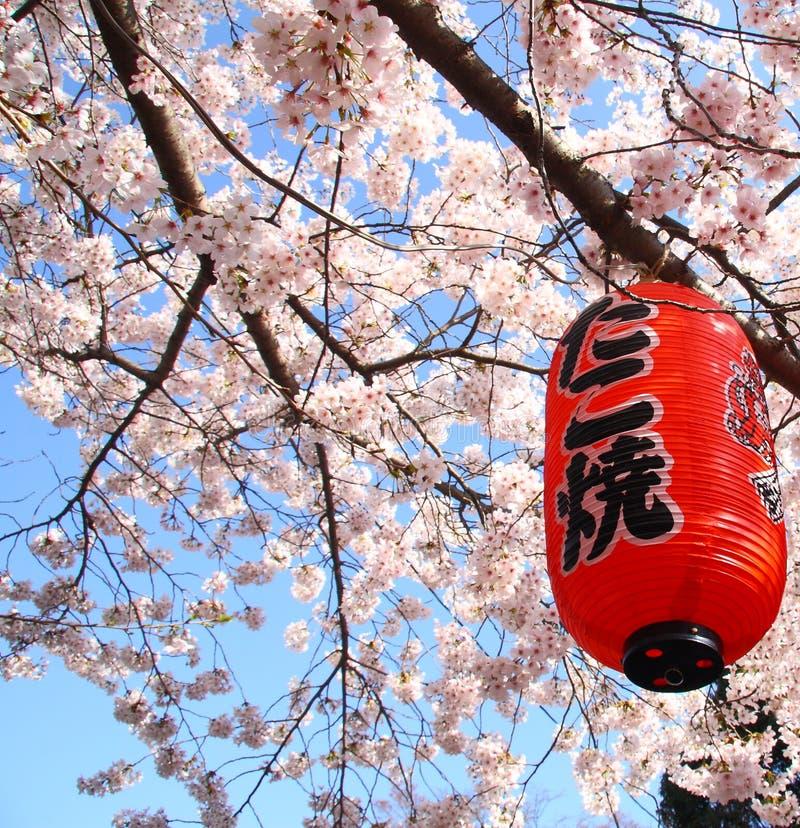 Sakura japan zdjęcia royalty free
