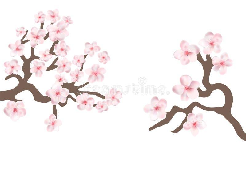 Sakura japan cherry branch with blooming flowers vector illustration. royalty free illustration