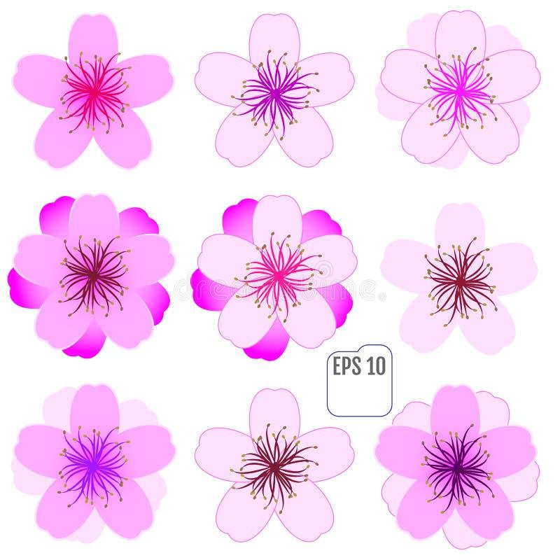 Sakura kwiaty ustawiający, czereśniowy okwitnięcie ilustracji