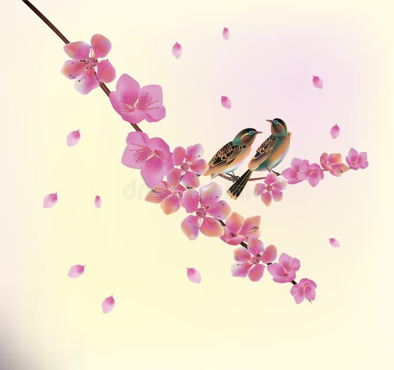 Sakura La soirée dans la cerise de floraison de jardin et les oiseaux chantent illustration libre de droits