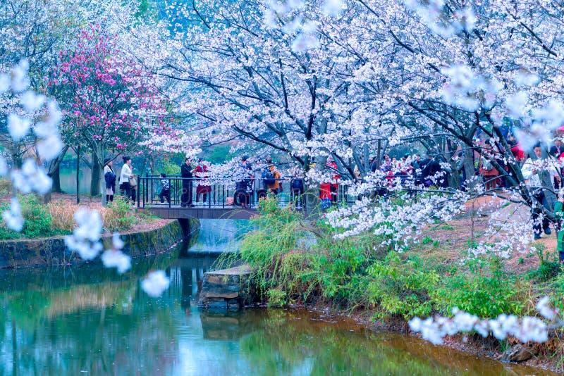 Sakura Lake-Jiangxi Academy de la silvicultura foto de archivo
