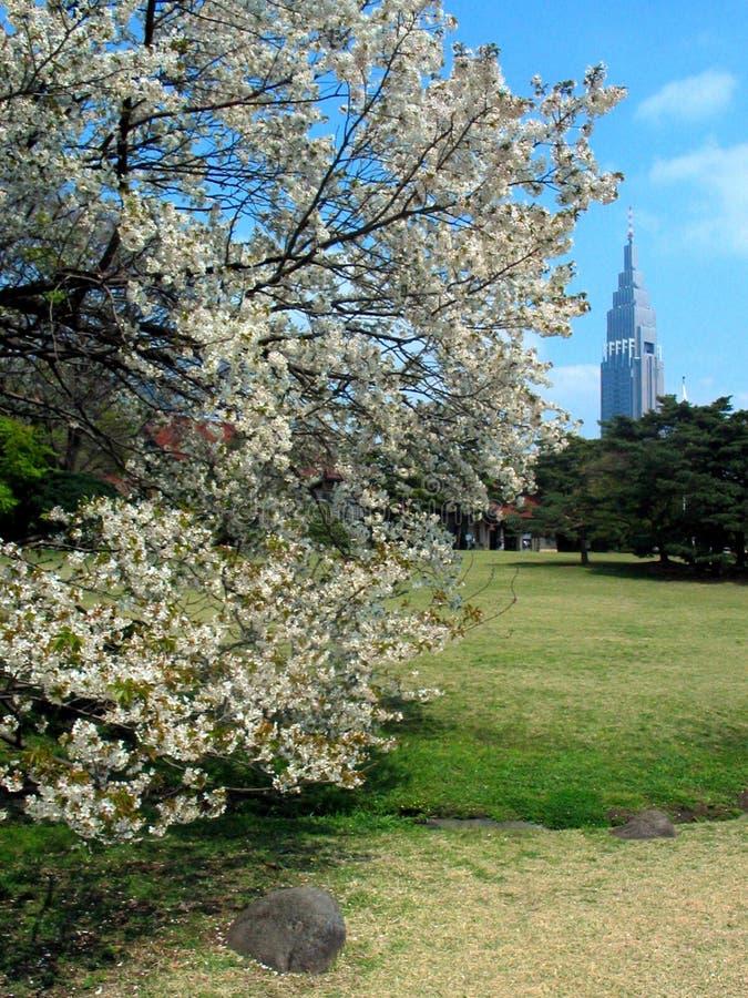 Sakura mit Kontrollturm in Tokyo lizenzfreies stockbild