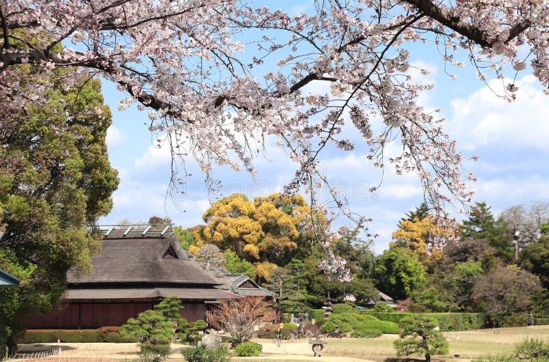 Sakura nel giardino di Koishikawa Korakuen, Okayama, Giappone immagini stock libere da diritti
