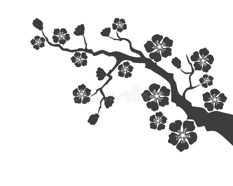 Sakura okwitnięcie na białym tle ilustracja wektor