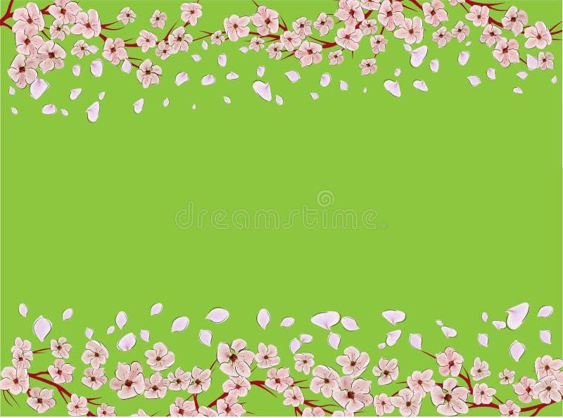 Sakura op lichte achtergrond Sakura-vectorbloem Vector florale afdruk Blooming kersenbloesem-bladen Japanse cultuur Floral royalty-vrije illustratie