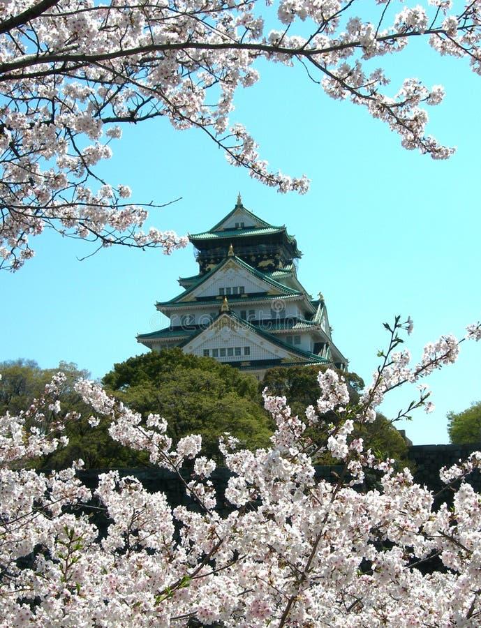 Sakura and Osaka Castle royalty free stock photography