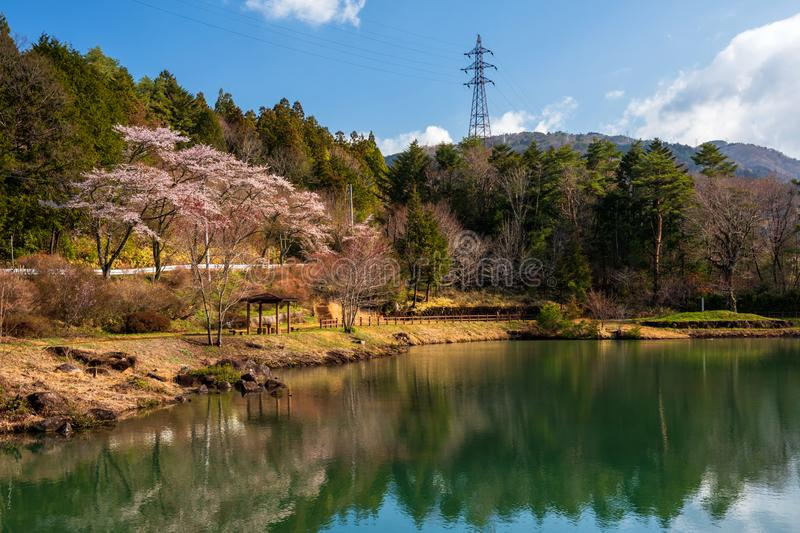 Sakura ou Cherry Blossom près d'étang, vallée de Kiso photos stock