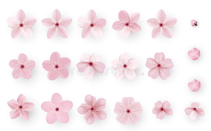 Sakura ou fleurs de cerisier réaliste ; Fleur japonaise Sakura de ressort ; Cherry Flower rose illustration de vecteur