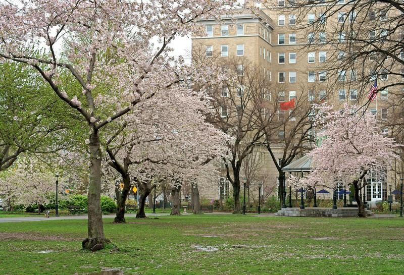 Sakura Park owes its name to more than 2,000 cherry trees delivered to parks in New York City from Japan in 1912.  stock images