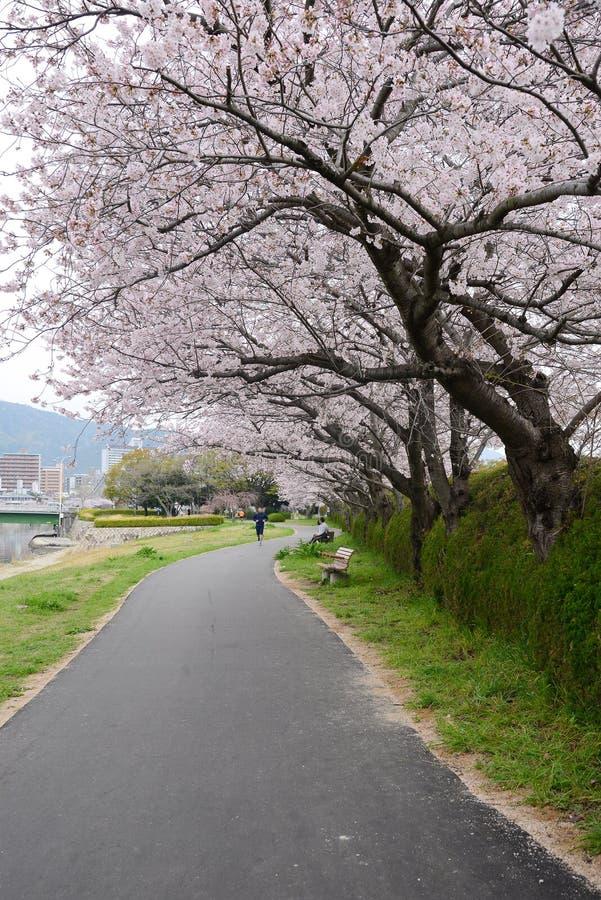 Sakura Path stock afbeelding