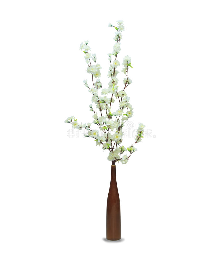 Sakura in the pot over white. White sakura in the pot over white royalty free stock photos