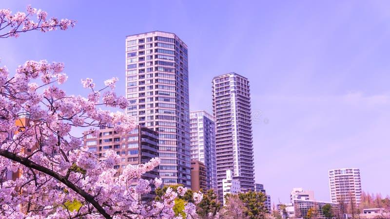 Sakura que floresce na primavera no parque de Ueno do Tóquio fotos de stock
