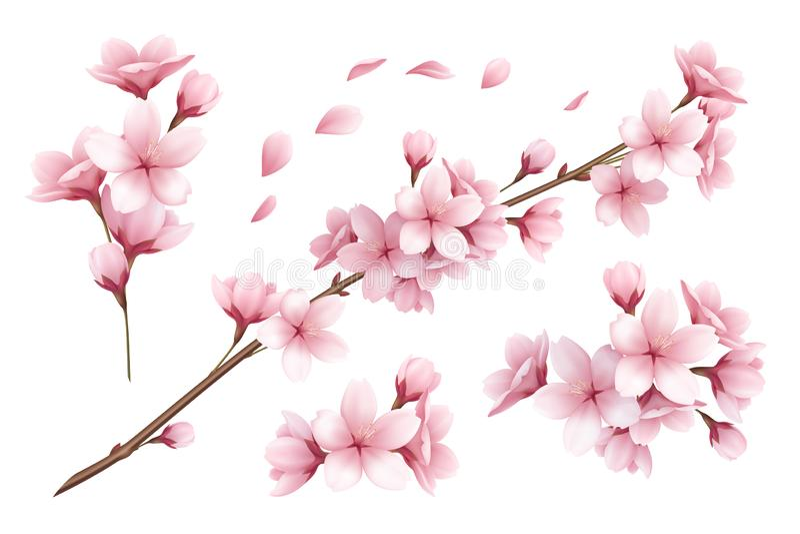 Sakura Realistic Set royalty illustrazione gratis