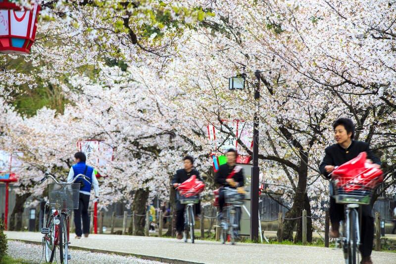 Sakura säsong i Kyoto, Japan royaltyfria foton