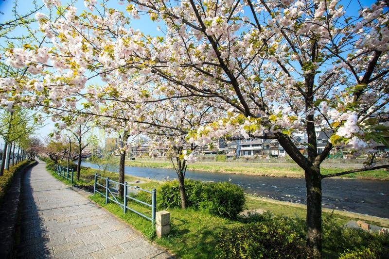 Download Sakura seaskon w Japonia zdjęcie stock. Obraz złożonej z park - 42525632