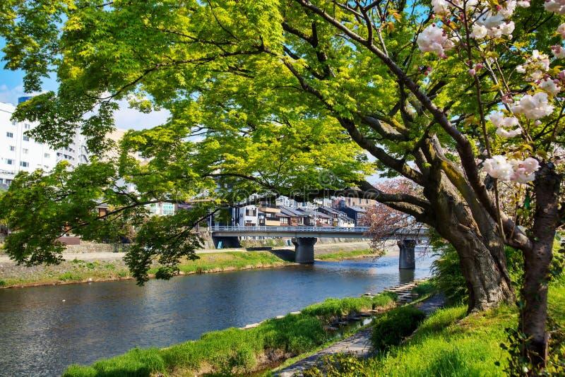 Download Sakura seaskon w Japonia obraz stock. Obraz złożonej z naturalny - 42525697