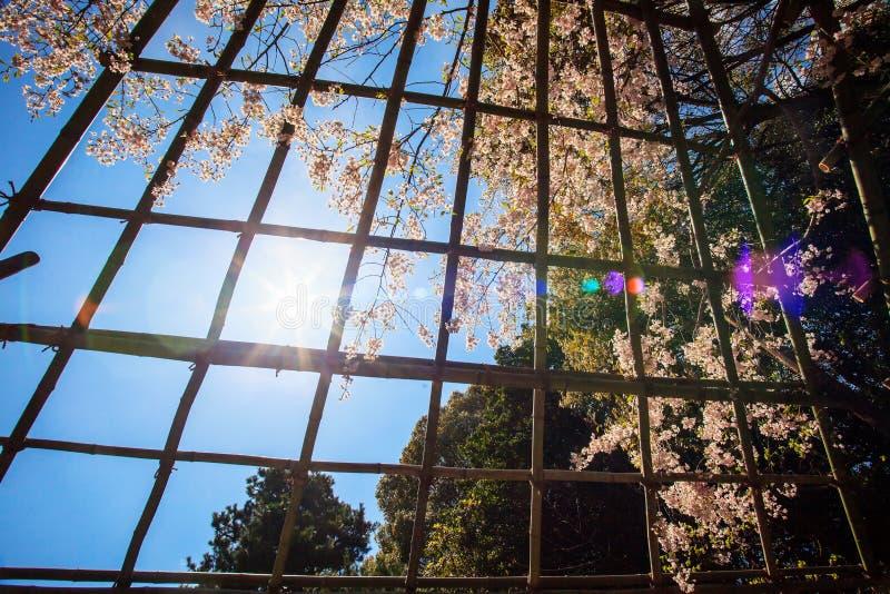 Download Sakura seaskon w Japonia zdjęcie stock. Obraz złożonej z historia - 42525850