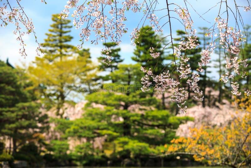 Download Sakura seaskon w Japonia obraz stock. Obraz złożonej z historia - 42525863