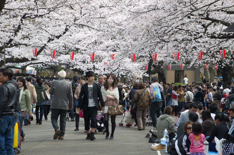 Download Sakura Season En El Parque De Ueno Fotografía editorial - Imagen de travieso, cereza: 42430807