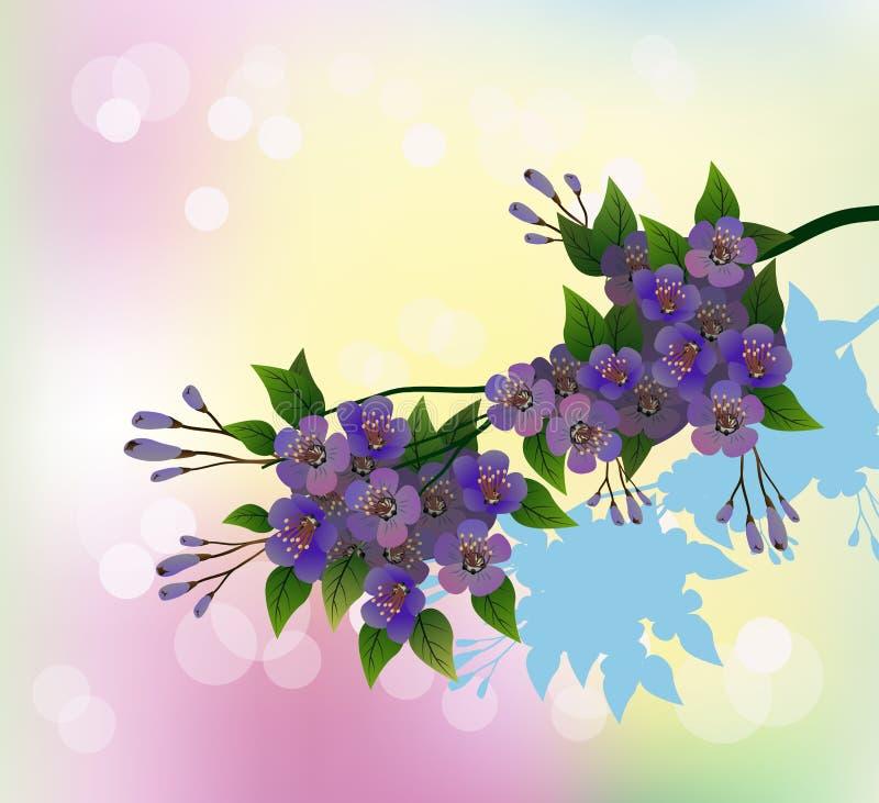 Sakura Sera nella ciliegia di fioritura del giardino illustrazione vettoriale