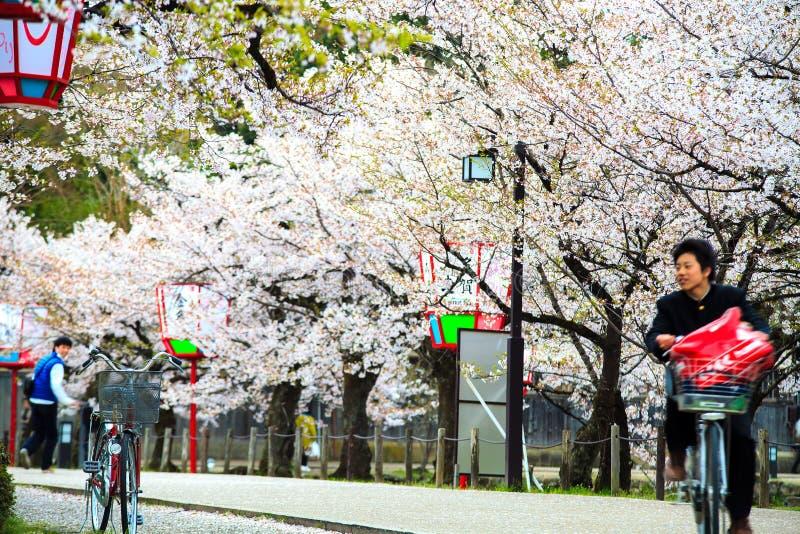 Sakura sezon w Kyoto, Japonia fotografia royalty free