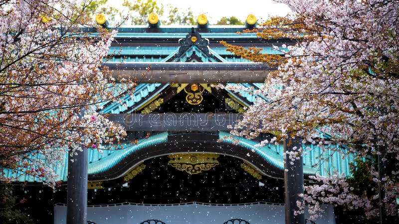 Sakura som ner blåsas royaltyfri fotografi