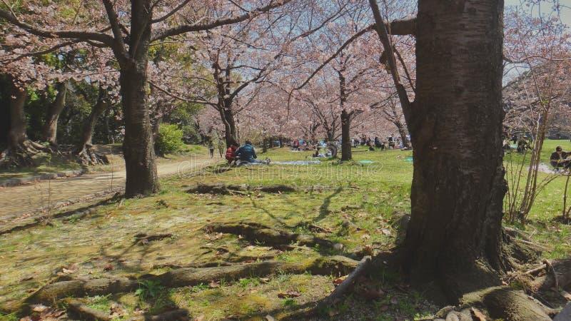 Sakura Tree Garden foto de stock