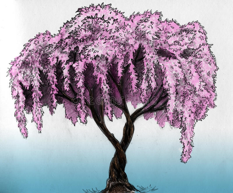 Sakura tree - pencil sketch. Sakura (cherry, plum of apple tree) in blossom. Pencil drawing, sketch, colored royalty free illustration
