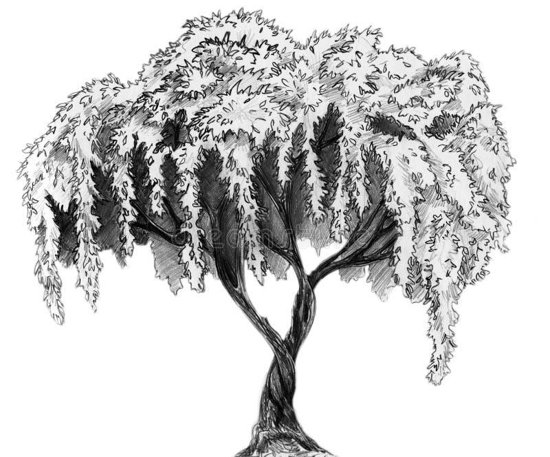 Sakura tree - pencil sketch. Sakura (cherry, plum of apple tree) in blossom. Pencil drawing, sketch isolated on white background stock illustration