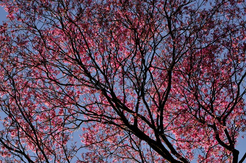 Sakura Tree Under Blue Sky during Daytime stock images
