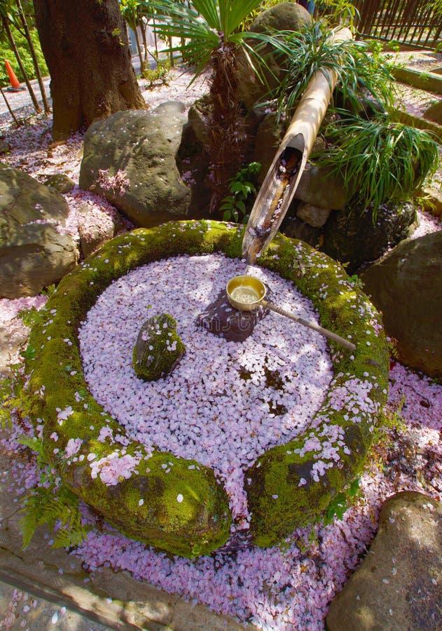 Sakura y Kokeraotoshi foto de archivo