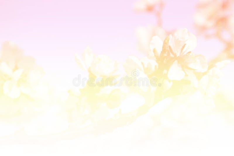 Sakurabloem die in uitstekende toon bloeien stock foto's
