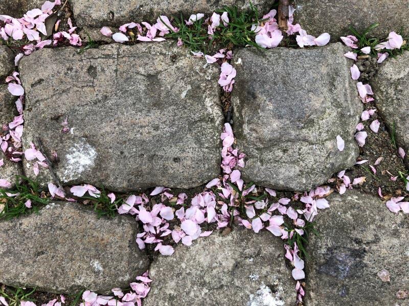 Sakurabloemblaadjes op stenen achtergrond-1 stock afbeeldingen