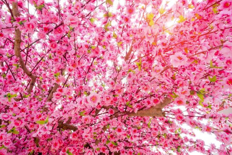 Sakurabloemen of kersenbloesems op het effect van de zonverlichting royalty-vrije stock fotografie