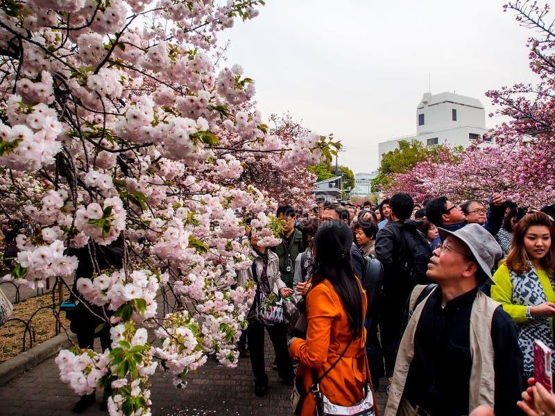 Sakurabloesem in Osaka, Japan 1 royalty-vrije stock fotografie