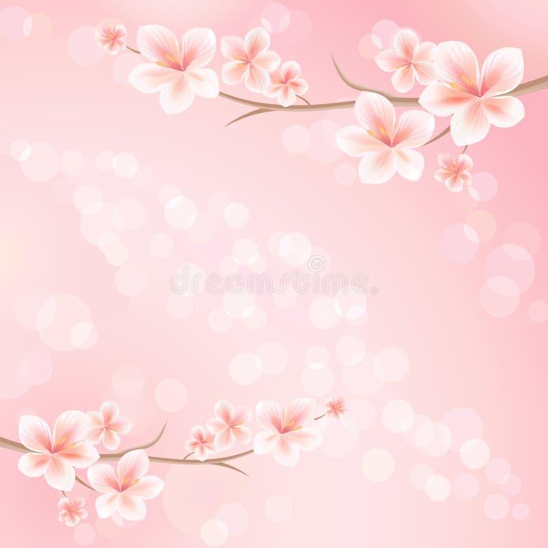 Sakurabloesems Tak van sakura met bloemen De tak van de kersenbloesem op roze kleur Vector vector illustratie