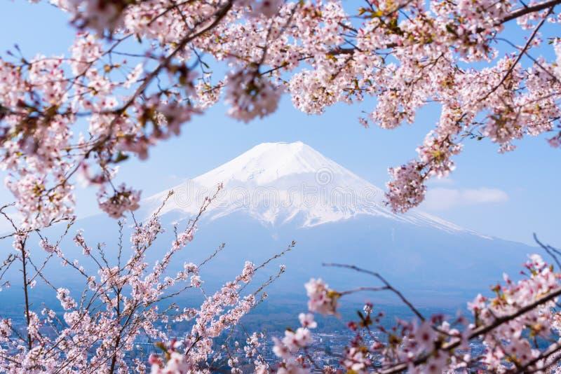 Sakuraboom in Japan De bloeiende bloem van de kersenbloesem op de Lente stock foto's