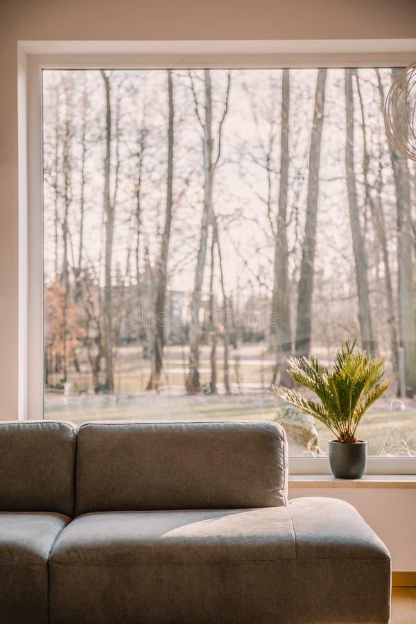 Salón gris que se coloca en interior de la sala de estar con la ventana grande y imagenes de archivo