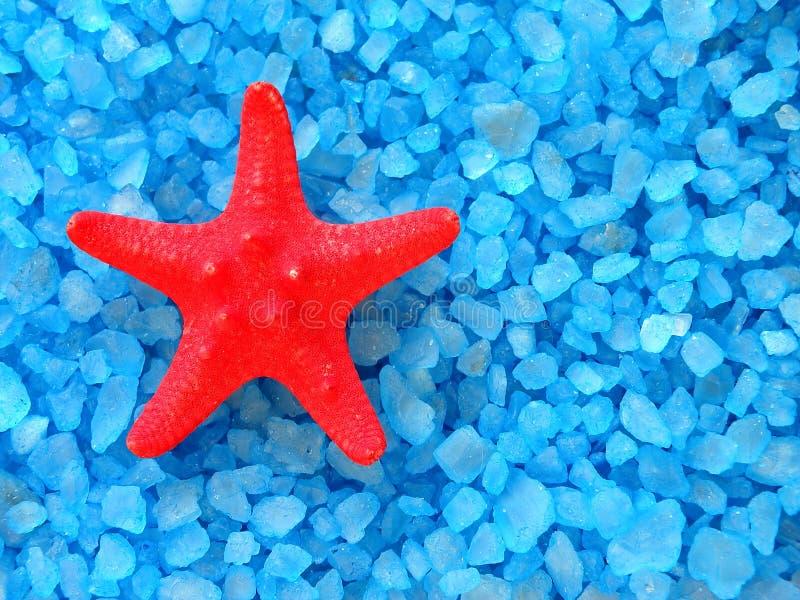Sal de baño y estrellas de mar imagen de archivo
