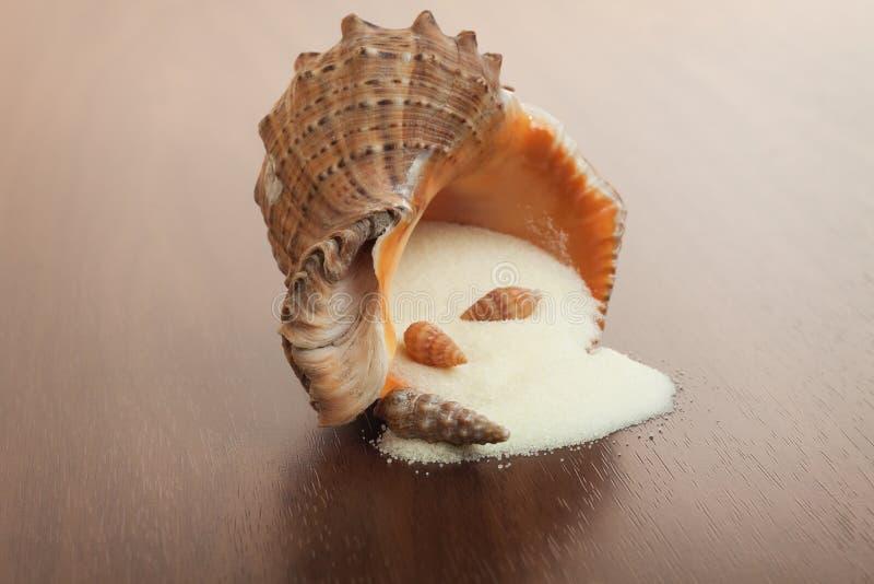 Sal de banho e seashell imagens de stock