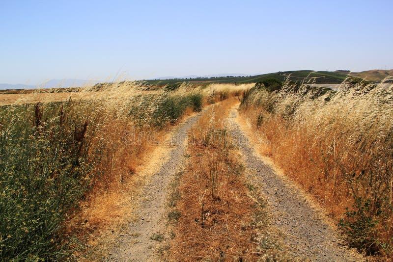 Sal Marsh Grass de Napa Valley foto de archivo