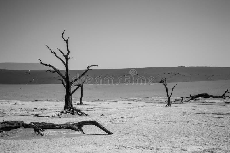 Sal Pan Desert Landscape de Sossusvlei com árvores inoperantes e minúsculo fotos de stock