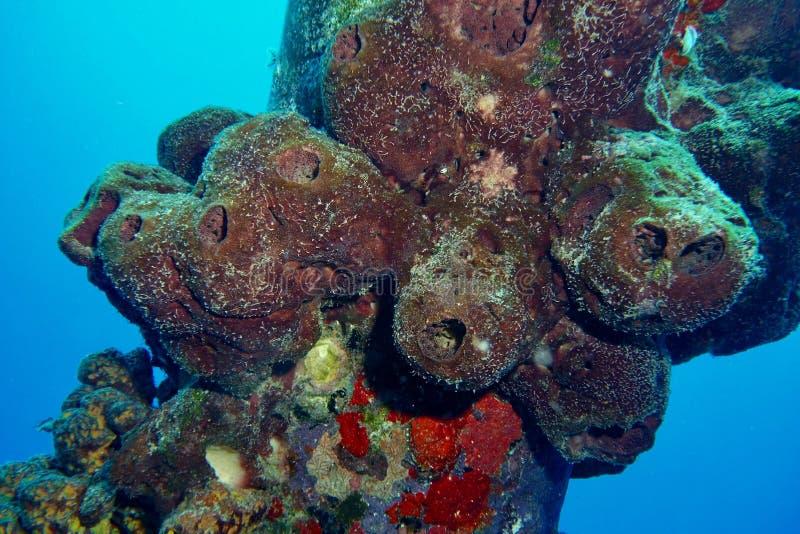 Sal Pier Sponges imagenes de archivo