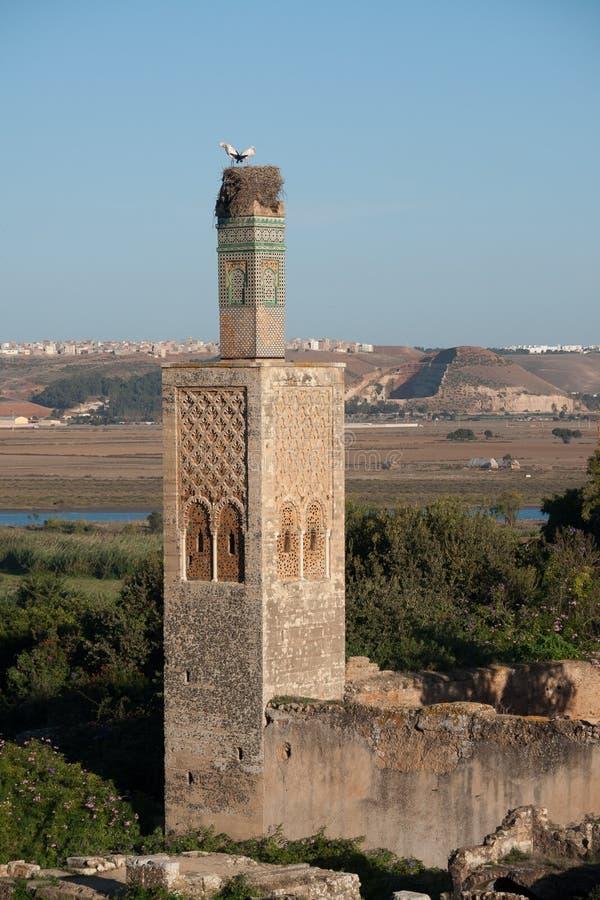 Sala科洛尼亚省,拉巴特,摩洛哥 鹳家庭在巢的在老尖塔的废墟 免版税库存图片