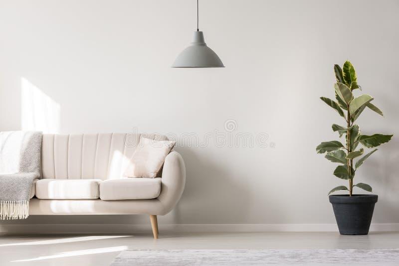 Sala de estar blanca con ficus ilustración del vector