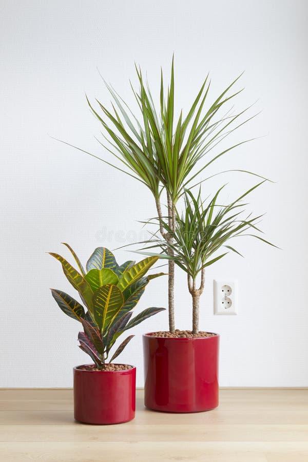 Sala de visitas brilhante com os houseplants em uns potenciômetros cerâmicos vermelhos no assoalho fotos de stock