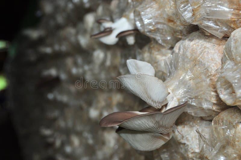 Sala do cogumelo imagem de stock