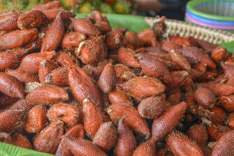 Salacca eller ormfrukt i korgen Oval form Brunt-röda skalanstrykningar, sött och surt royaltyfri bild