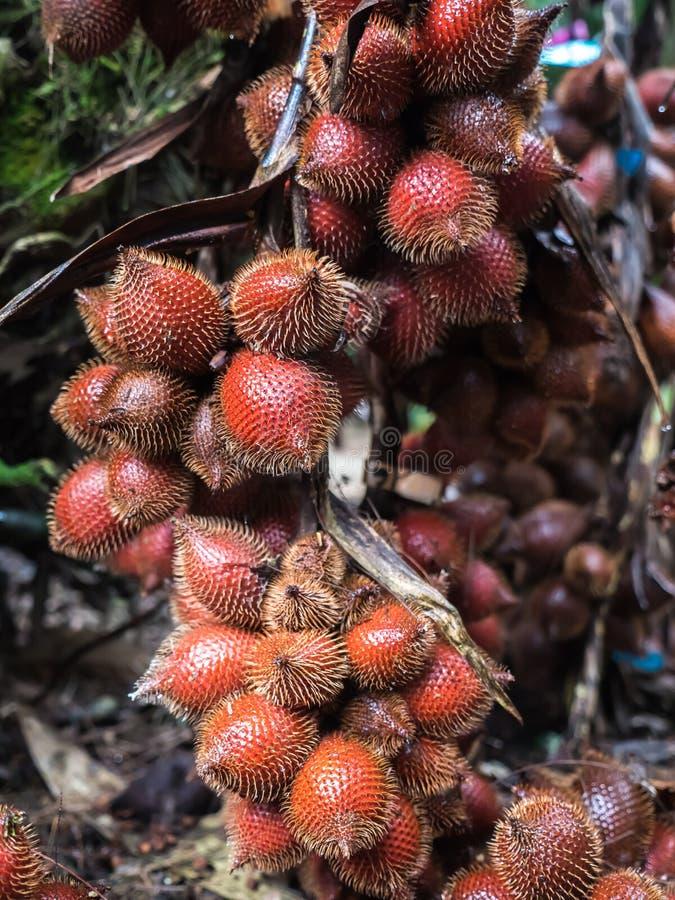 Salacca eller Salak frukt royaltyfria foton